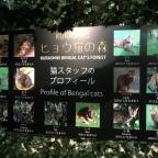 Kirashiki Bengal Cat Forest – Japan (OTBT)